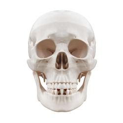 Plastic human skull on isolated white background.