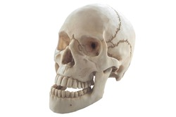 Plastic human skull on isolated white background.clipping path.