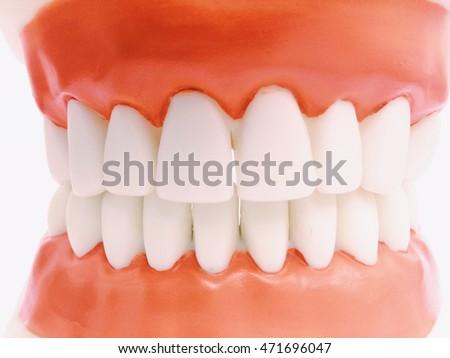Plastic human teeth models. | EZ Canvas