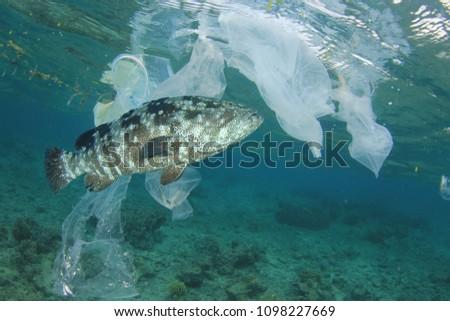 Plastic pollution and fish. Plastic in ocean contaminates seafood