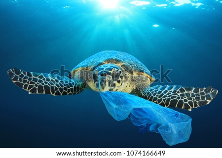 Plastic pollution in ocean environmental problem. Turtles can eat plastic bags mistaking them for jellyfish - Shutterstock ID 1074166649
