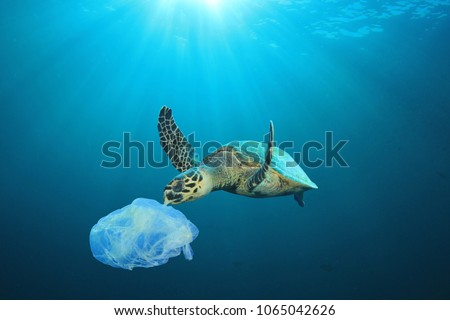 Plastic pollution in ocean problem. Sea Turtle eats plastic bag