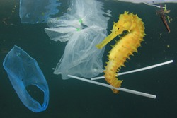 Plastic pollution in ocean. Seahorse fish and plastic garbage