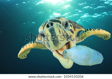 Plastic pollution problem: Sea Turtle eats plastic bottle