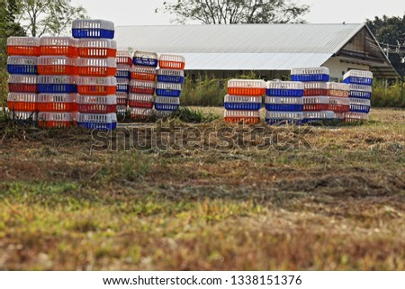 Plastic poultry transport crates. Plastic chicken transport cage for poultry farm. Properly designed transport crates protect the feet of poultry.