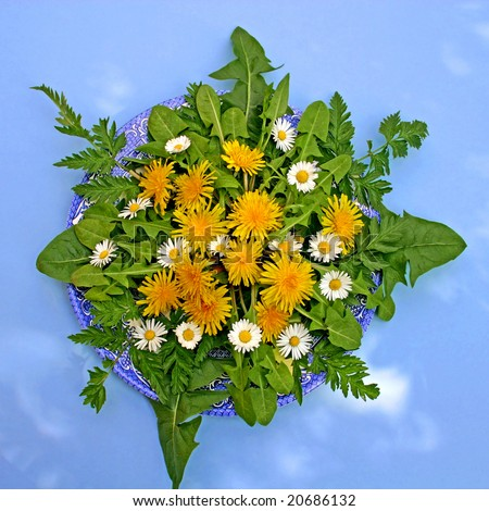 Plate of wild plants including dandelions fit for a rabbit, for metaphorical or conceptual use