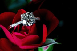 Platinum Diamond Ring On Red Rose