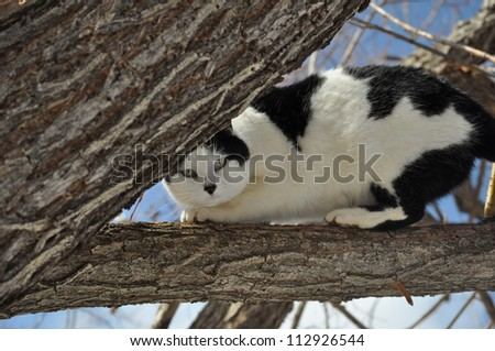 Playful Black and White Cat in Tree