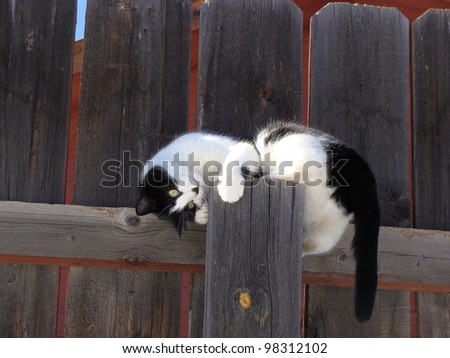 Playful Black and White Cat on Fence