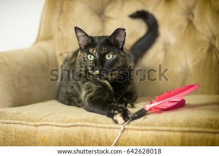 Playful Cat #642628018