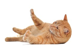 Playful cat lying on its side with the claws out