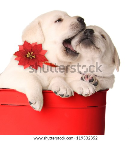 Playful Christmas puppies in a red container.
