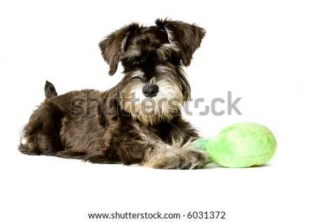 Playful dog with chew toy