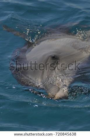 Playful dolphin #720845638