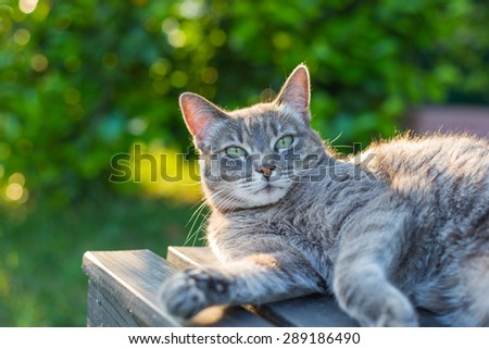 Playful domestic cat lying on one side on a black wooden bench looking down. Shot outdoors in backlight with very shallow depth of field, focused on the eyes.