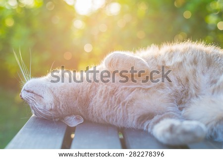 Playful domestic cat lying on wooden bench with bent paws. Shot in backlight at sunset. Very shallow depth of field, focused on snout.