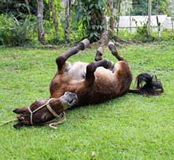 Playful donkey laying on their back