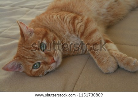 playful ginger cat #1151730809