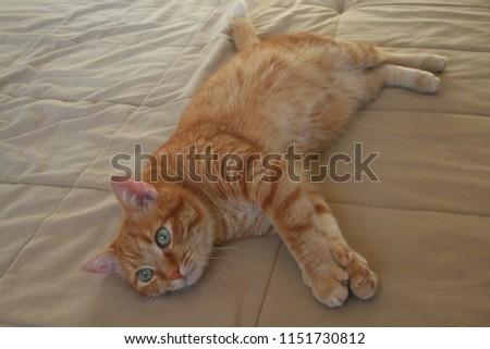 playful ginger cat #1151730812