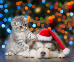 playful kitten and sleepy puppy on a background of the Christmas tree