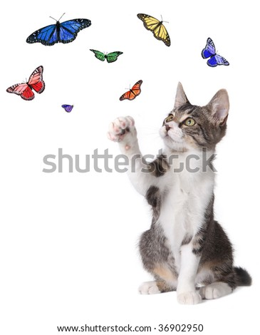 Pictures Of Butterflies Flying. Butterflies Flying Around