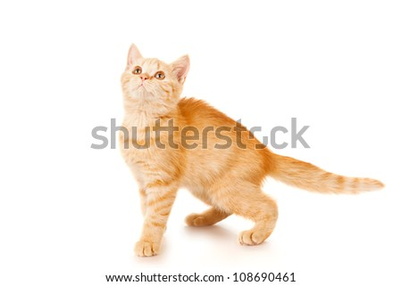 Playful kitten isolated on white