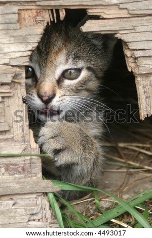 Playful kitten peeking from the mouse hole
