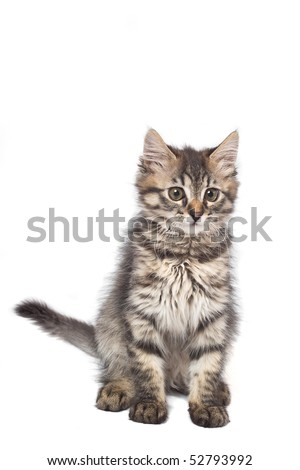 Playful little kitty isolated over white - stock photo