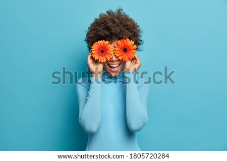 Playful positive African American woman covers eyes with two orange gerberas, enjoys spring time, fresh flowers, has fun, dressed casually, isolated on blue background. Happy florist indoor.