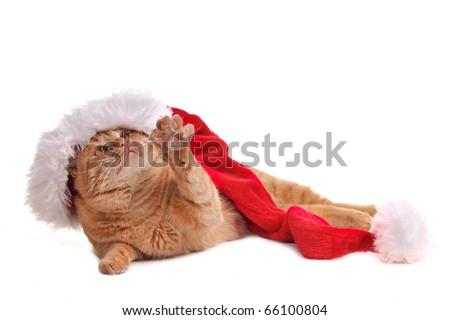 Playful Santa Cat in Christmas Hat
