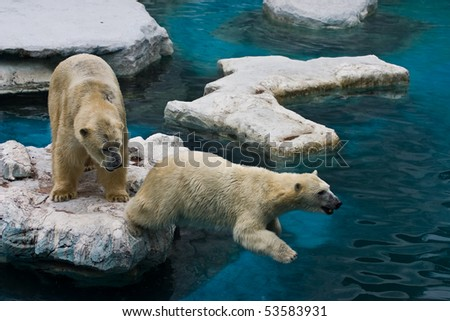 Playful White bears