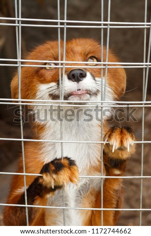 Playfull, beautiful puppy in the shelter cage #1172744662