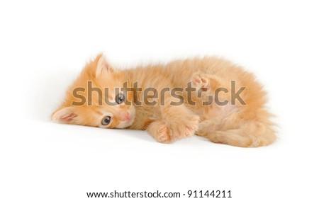 playfull red kitten, lying, isolated on white