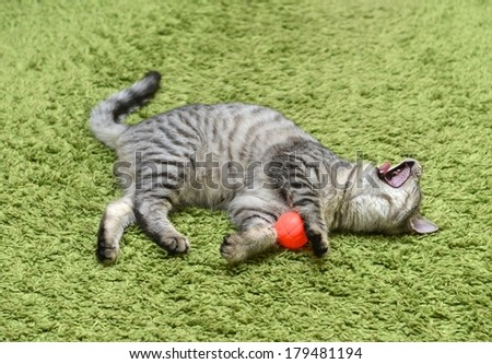 Playing cat on a green background, curious cat, domestic cat, little cat playing with ball in apartment, funny cat