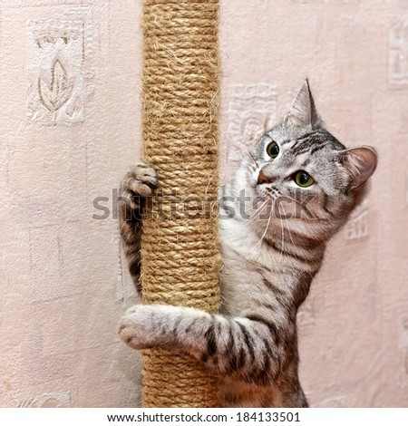Playing cat on domestic background, curious cat, domestic cat, little cat playing in apartment, funny cat in poor light, curious cat, active cat, friendly cat