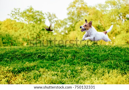 Playing off leash dog chasing bird in park