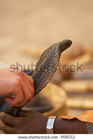 Playing with a snake (New Delhi, India).