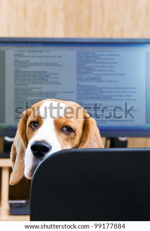 Please do not prevent to work!Focus on a dog.