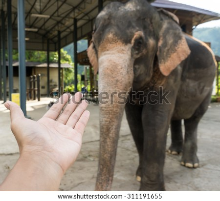 please give me hand or trunk