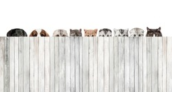 plenty cats and dogs hiding behind the fence of white wooden plank. Pet homeless shelter concept
