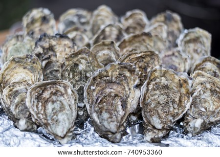 Plenty of fresh closed oysters on ice. Close up. Sea food. #740953360