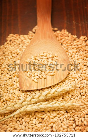 Plenty of wheat grains on an old wooden kitchen table