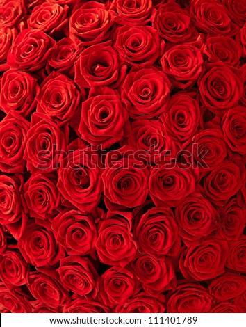 Plenty red natural roses background