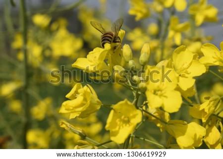 plight of the wild honey bee