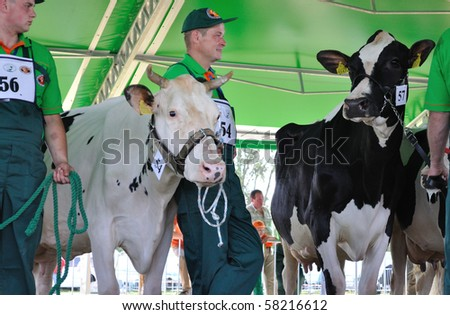 PLONSK - JUNE 12: Dairy cows with their owners compete at a cattle show, during the 11th Masovian Agriculture Days. June 12, 2010 in Plonsk, Poland. - stock photo