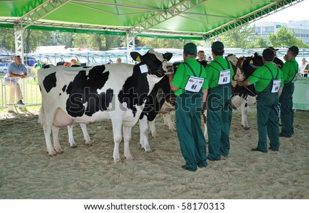 PLONSK - JUNE 12: Dairy cows with their owners competing at a cattle show, during the 11th Masovian Agriculture Days. June 12, 2010 in Plonsk, Poland.