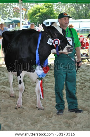 PLONSK - JUNE 12: Prize winning cow with their owner competing at a cattle show, during the 11th Masovian Agriculture Days. June 12, 2010 in Plonsk, Poland