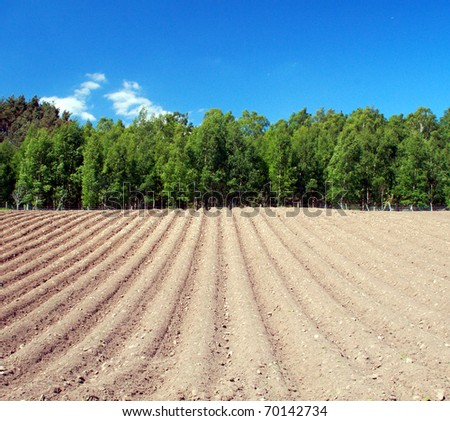 Ploughed field with trees on the horizon