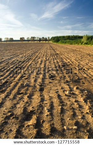 Plowed and sown field at sunset with beautiful sky #127715558