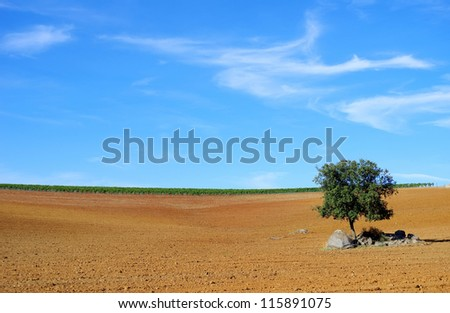 Plowed fiel at Alentejo region, Portgal